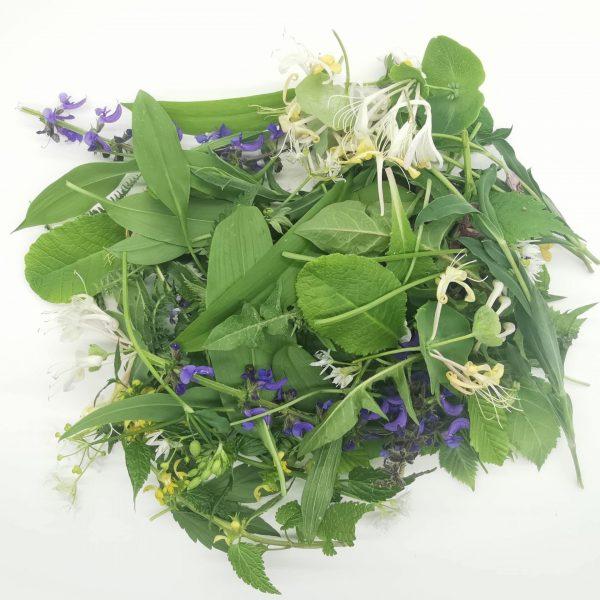 Divje užitne rastline
