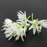 cvetke čemaža