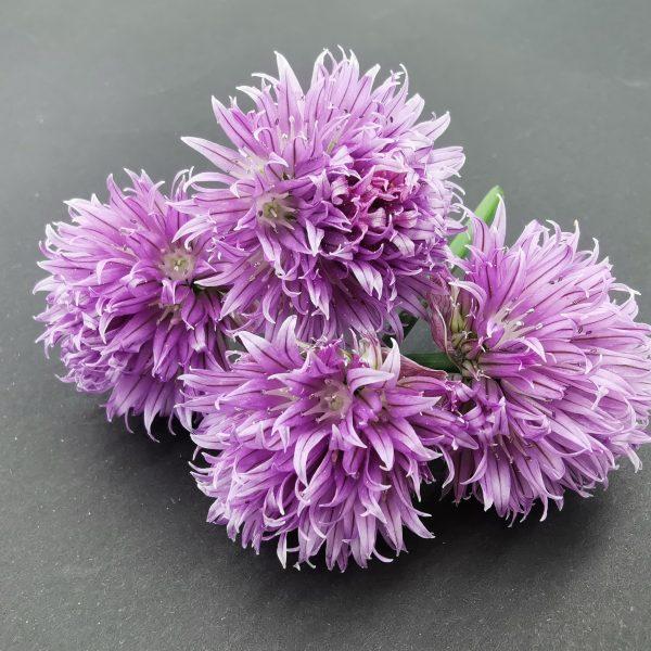 cvetovi drobnjaka