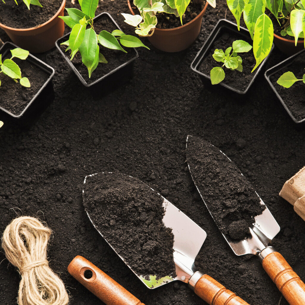 vrtna semena